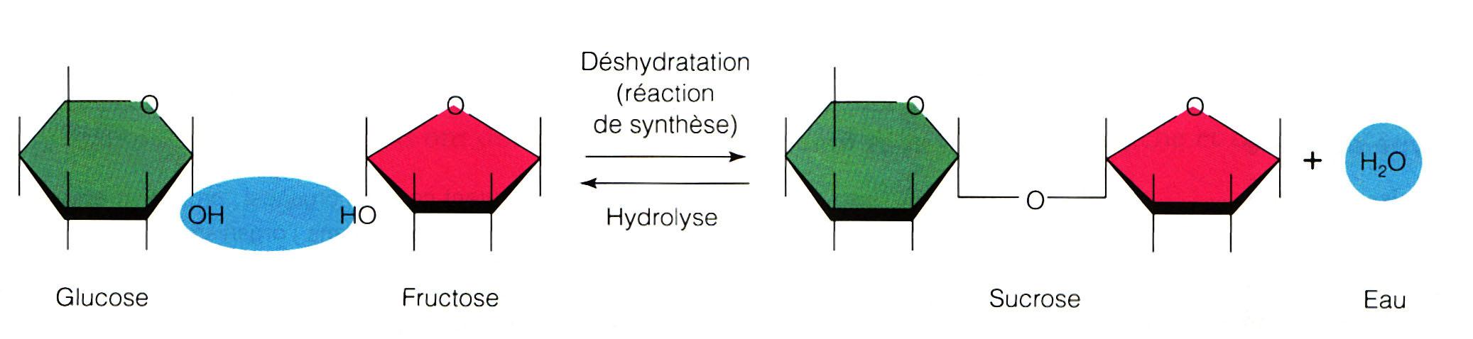 onde de forme eau